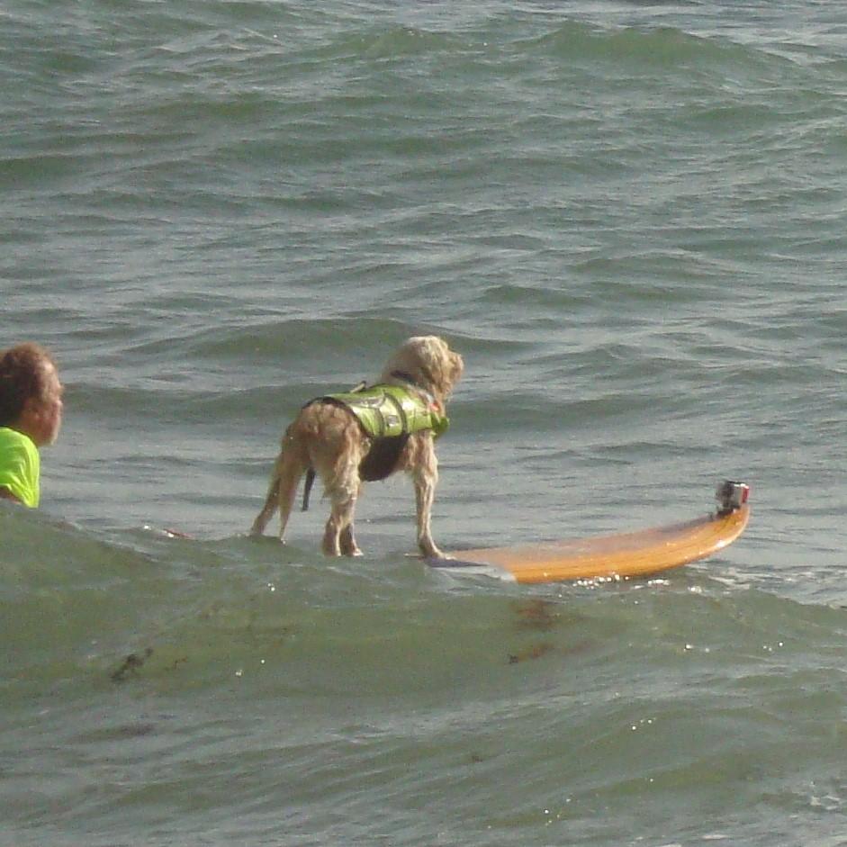 Mark and Waldo paddling out.
