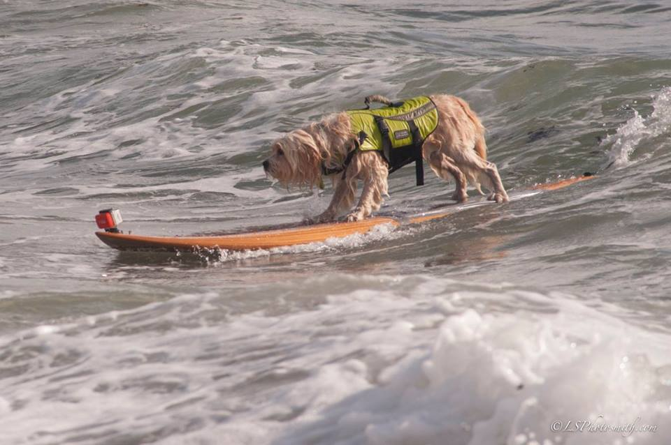 Waldo catching a wave. (Photo by Lindsey Smith / Team Waldo Facebook page)