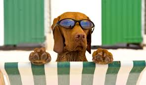 barks-and-beaches